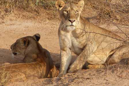3 Days Lake Mburo and Queen Elizabeth safari - 1 day lake mburo national park tour