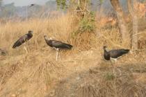 12 Days wildlife tour - 8 Days Uganda tour, primates and wildlife safari - Top destinations