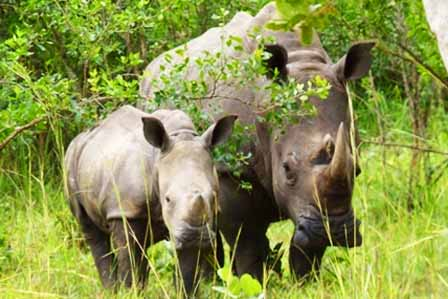 11 Days Best of Uganda - African adventure travellers