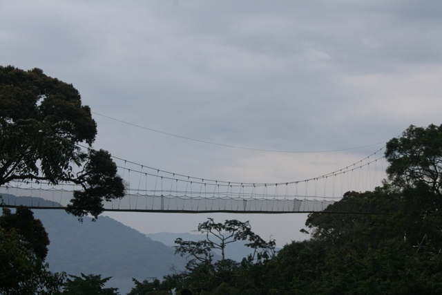 Canopy Walk - Nyungwe National Park